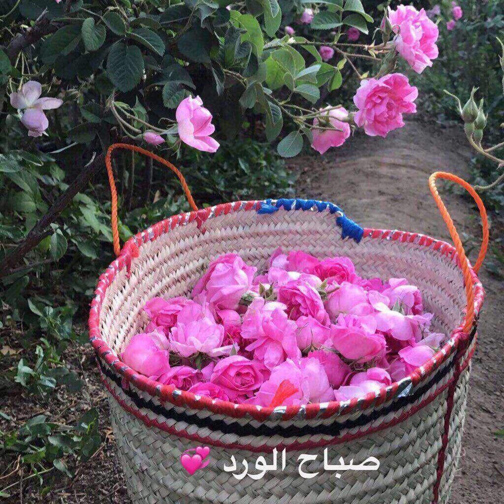 صباح الخير Good Morning Beautiful Images Good Morning Roses Good Morning Beautiful