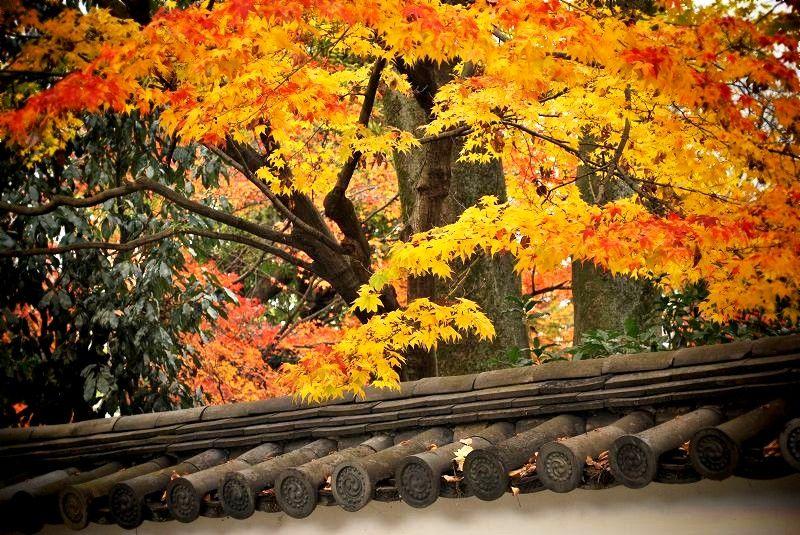 建仁寺:築地塀と紅葉