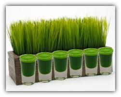 Wheat Grass Juice is a Cancer Buster!  BreastCancerConqueror.com/ Healing Breast Cancer/ Natural Cancer Cures/ Recipes for Cancer Patients
