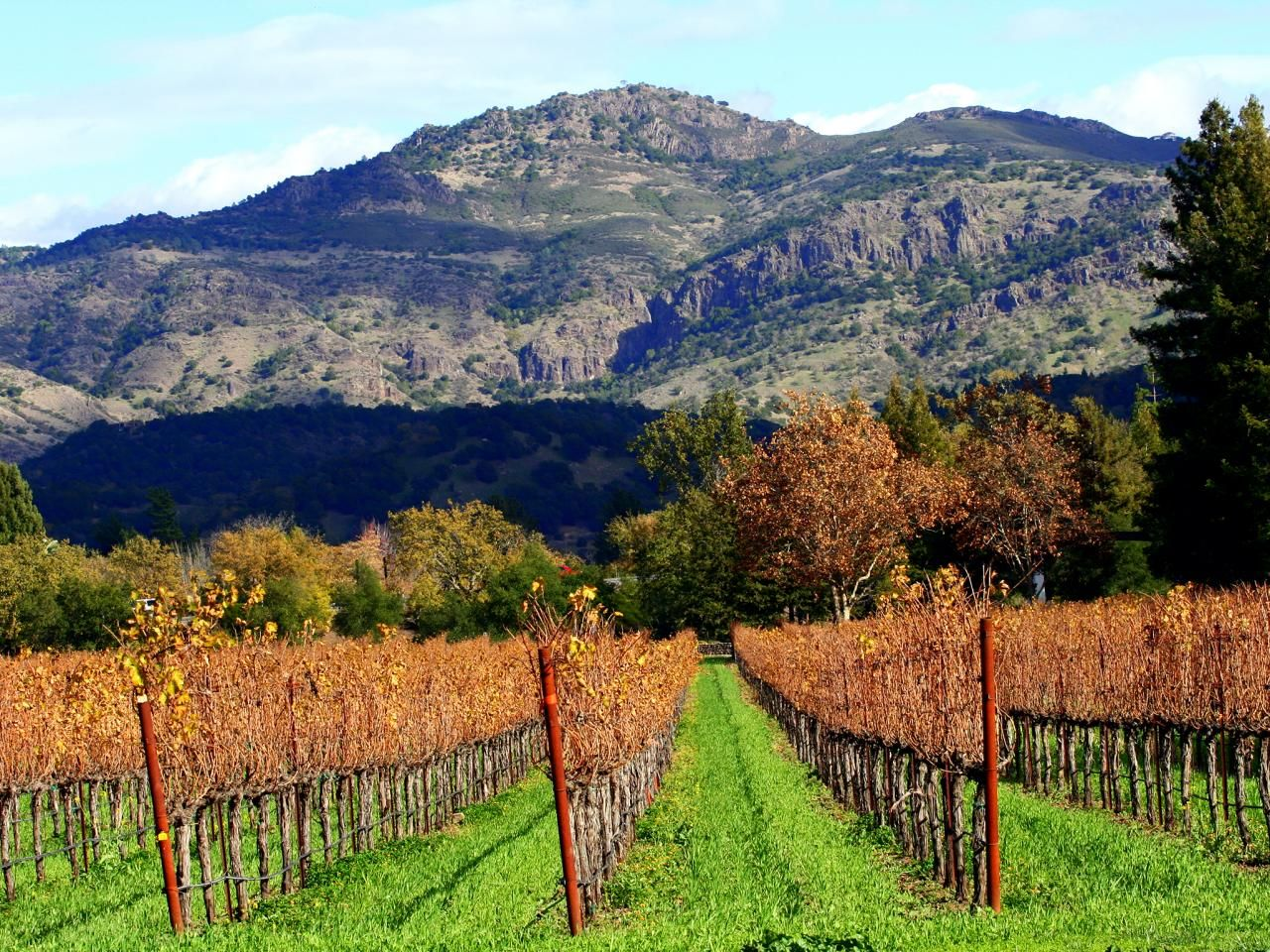 Wine Country : Napa Valley and Sonoma Road Trip : TravelChannel.com