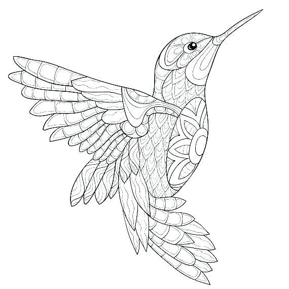 Hummingbird Coloring Pages Dekajuit Info Hummingbird Drawing Coloring Pages Bird Coloring Pages