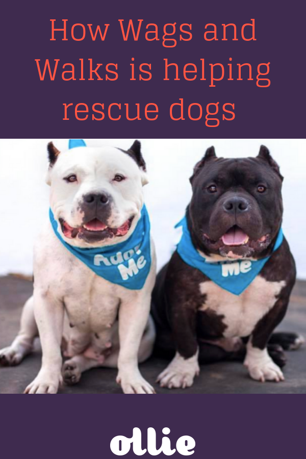 How Wags And Walks Is Helping High Risk Rescue Dogs Find A New Home Wags And Walks Rescue Dogs Dogs