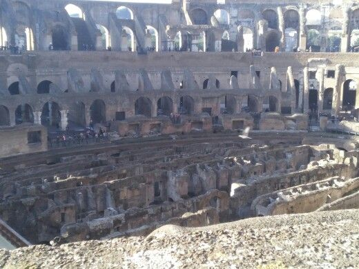 Hazels mist so strong picture of a maze at the colluseum