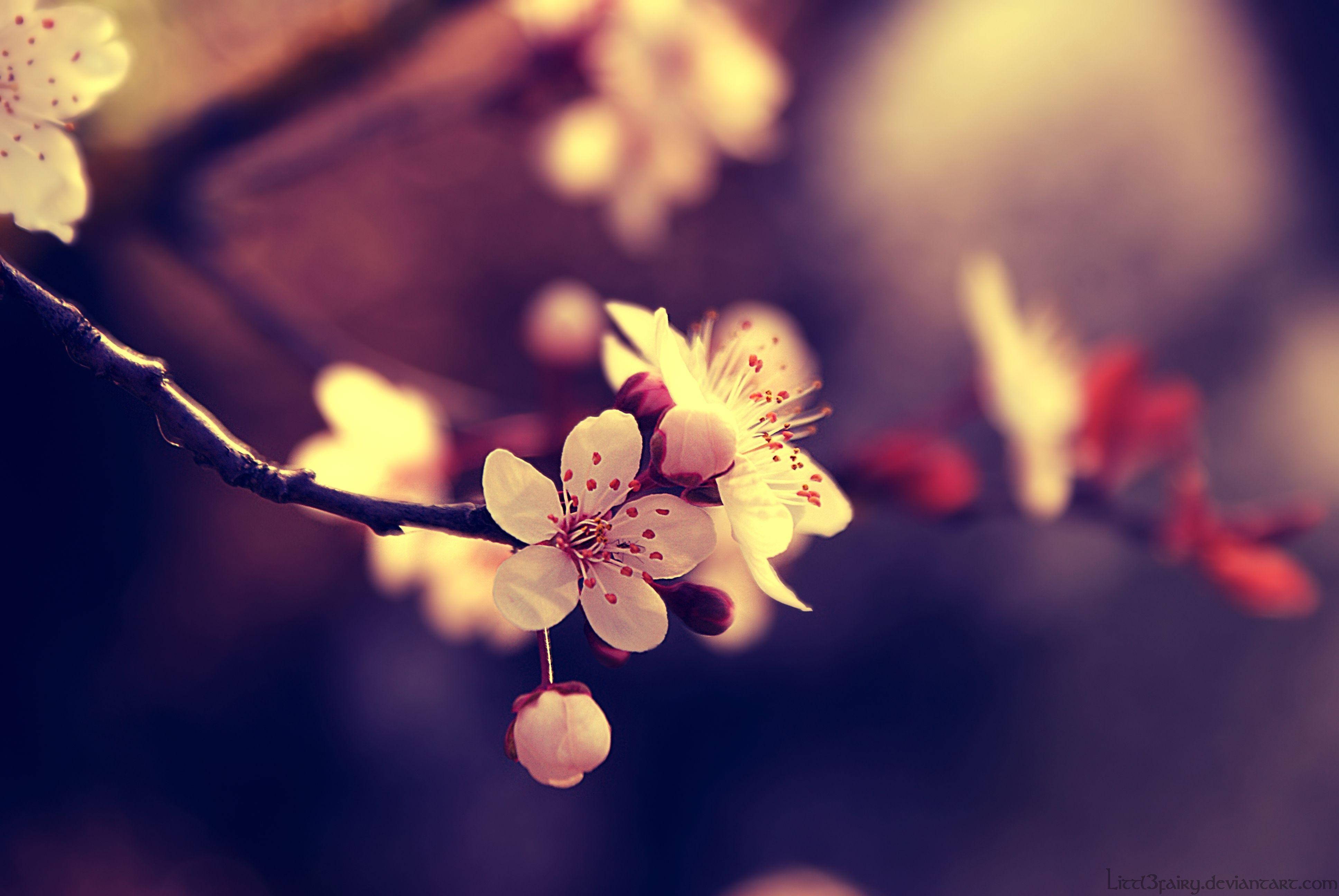 Beautiful Spring Pictures my beautiful spring : elegant flower wallpaper   elegant flowers