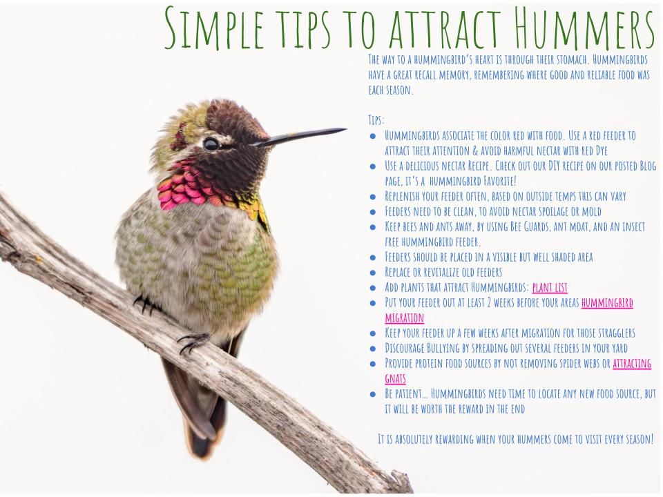 Simple Tips to Attract Hummers How to memorize things