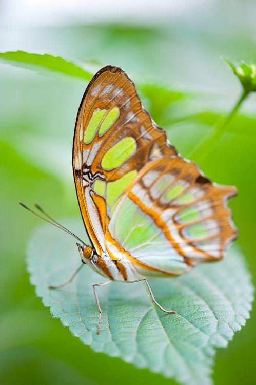 Spring Schmetterlingshaus Schmetterling