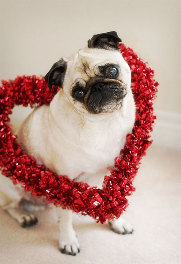 20 Most Cutest Valentine's Day Dogs