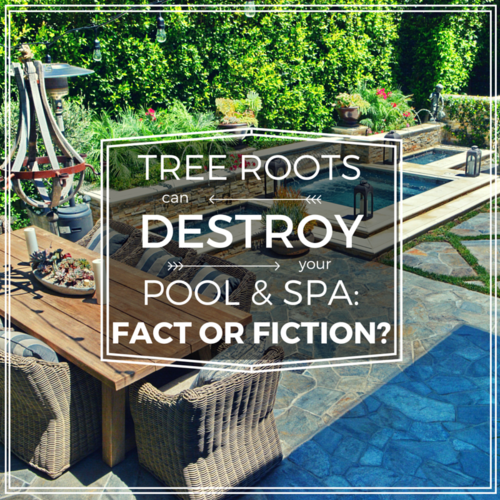 Ever wonder if #tree roots will destroy your #swimmingpool or #spa - find out the answer here! (800) 282-7665 info@californiapools.com #swimmingpoolcontractor #swimmingpoolblog #blog #swimmingpoolbuilder #swimmingpoolandspa