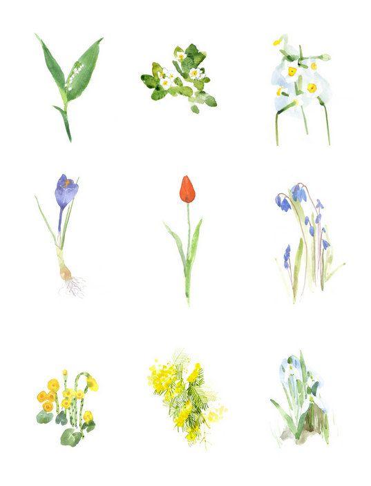 Spring Flowers Coltsfoot Lily Of The Valley Scilla Mimosa Snowdrop Crocus Narcissus Tulip Primrose Set Blumen Zeichnen Aquarellbilder Aquarellfarben