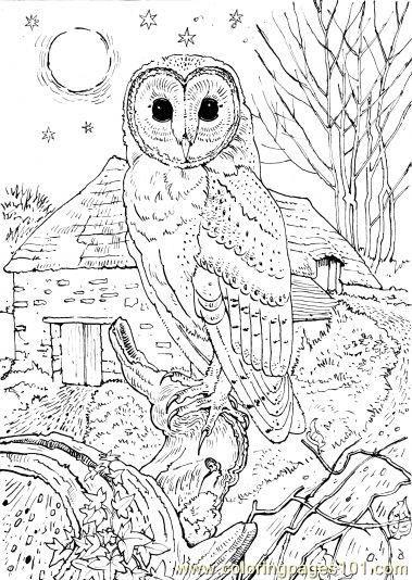 Owl Sit School Coloring Page Free Printable Coloring Pages Owl Coloring Pages Detailed Coloring Pages Animal Coloring Pages