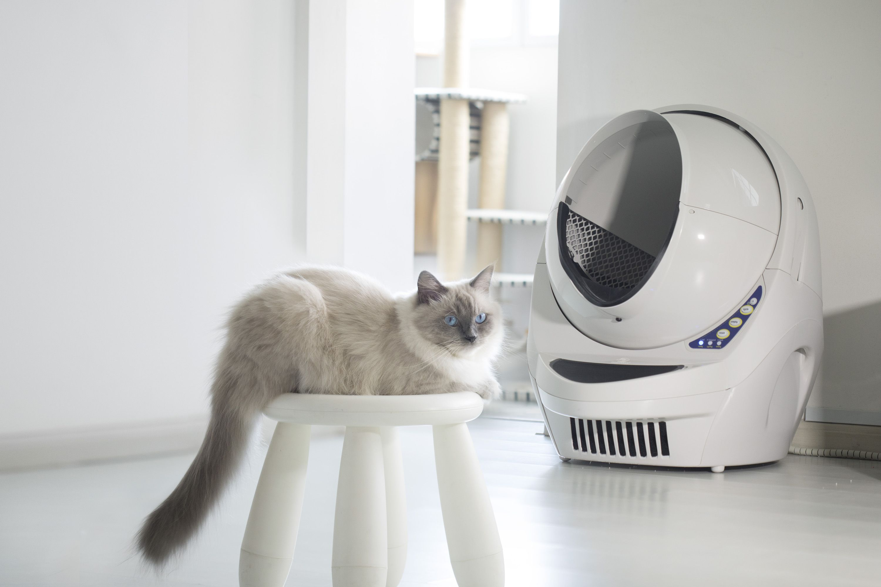 Pin by LitterRobot on Picture Purrfect Self cleaning