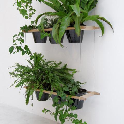 Zimmerpflanzen in Szene setzen | LIVING AT HOME