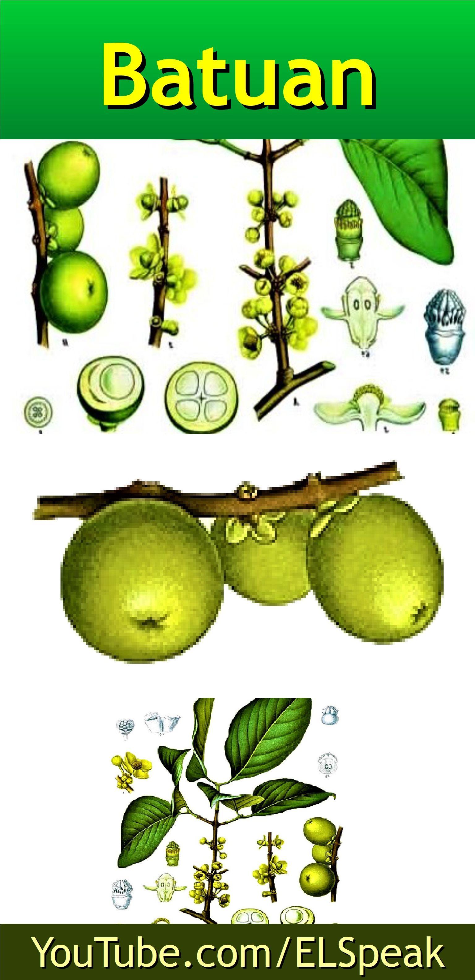 Batuan Fruits Name In English Fruit Names Fruit List