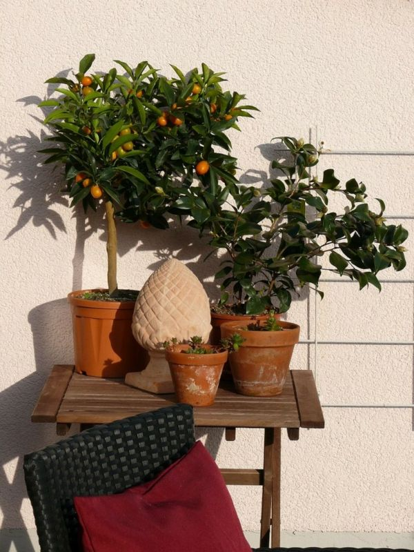 Mediterrane Terrasse Mit Lemon Bäumen - Die Besten Ideen Für ... 28 Ideen Fur Terrassengestaltung Dach