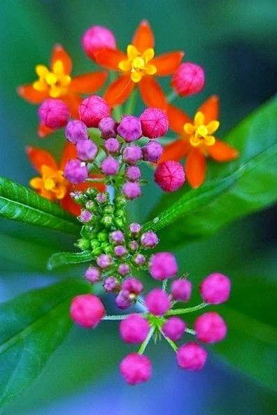 Garden and Monarchs