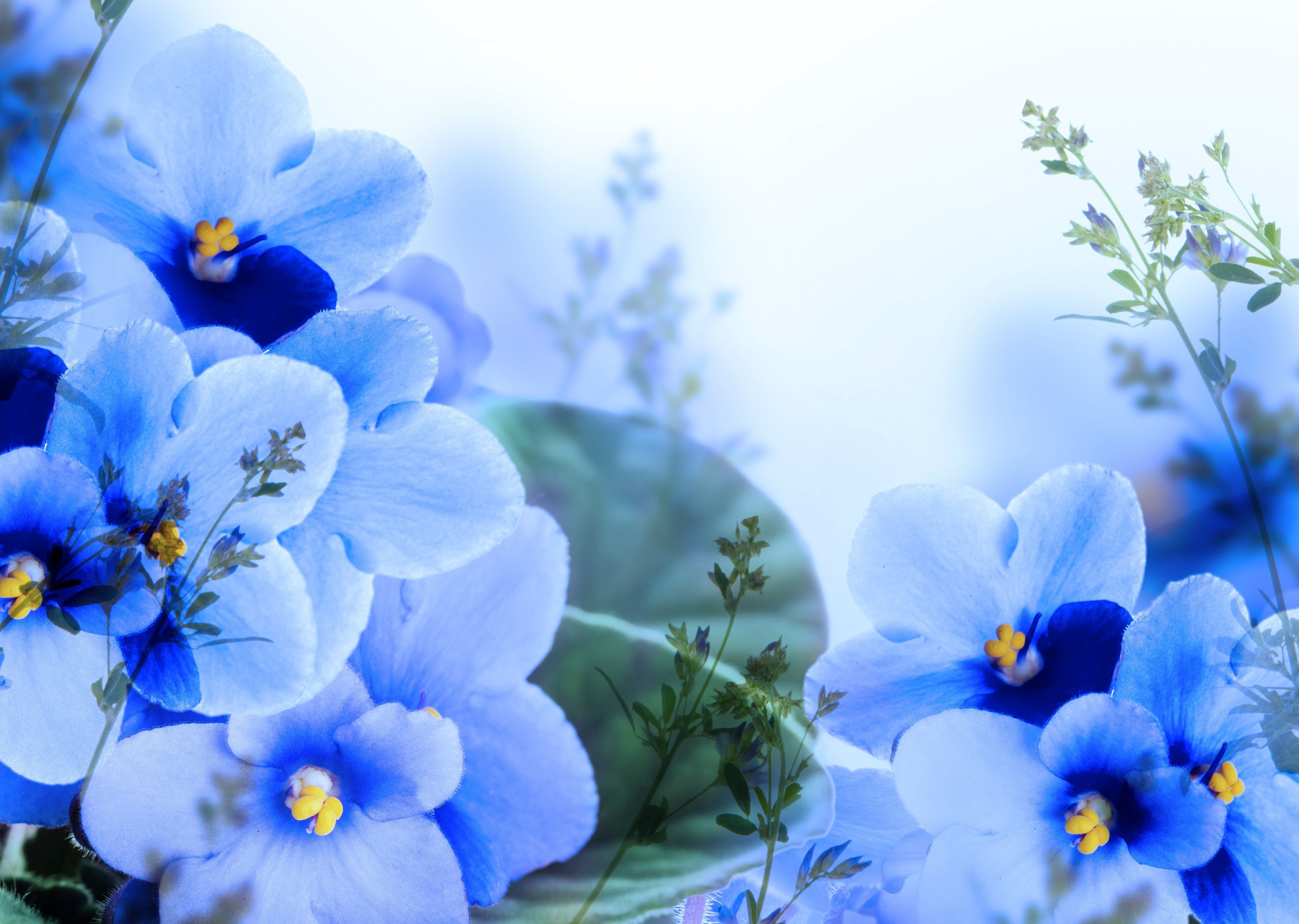 Обои синие, цветы. Цветы foto 14