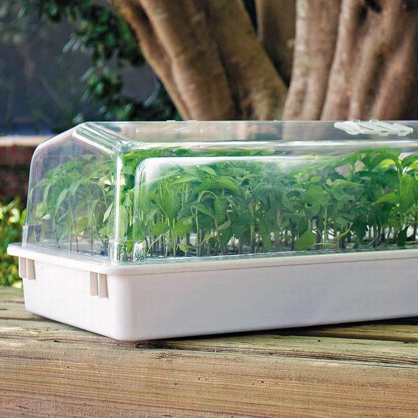 теплица для проращивания семян