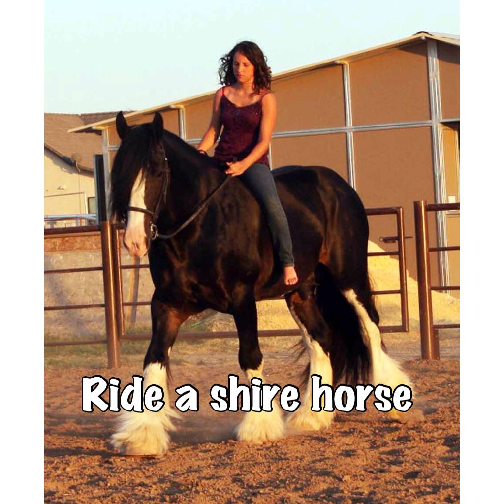 Shires r really big and tall