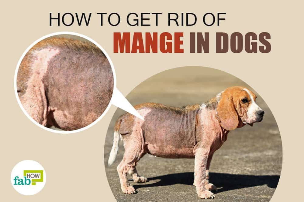 Dermacton Reviews Dog Obedience Classes Mange Treatment For