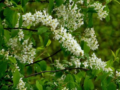 Zlapane W Kadr Herbs Grapes Fruit