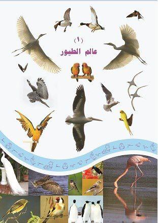 الفصل الأول عالم الطيور الطيور كائنات تنتمي إلى مجموعة الفقاريات وقد غزت الهواء بفضل عدد من الصفات Kids Education Animals Books