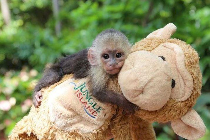 Monkey See Monkey Save 14 Off Jungle Island In November Http Www Destinationcoupons Com Florida Miami Attractions As Miami Attractions Miami Miami Florida
