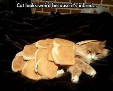 50 Best Funny Animal Memes - Page 5