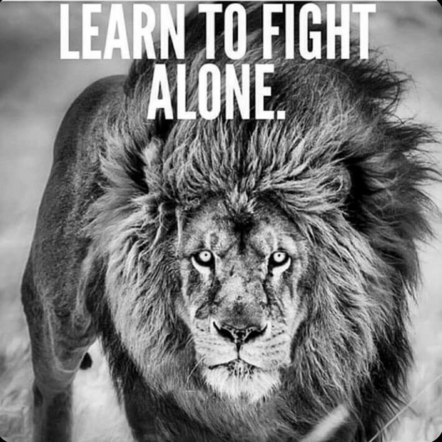 I am a fighter   Lion quotes, Short inspirational quotes ...