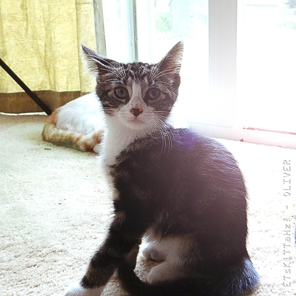 HAPPY TUESDAY EVERYBODY !!!  #meow #CatsOfTwitter #kittens  <3 @ETsKiTTaHz