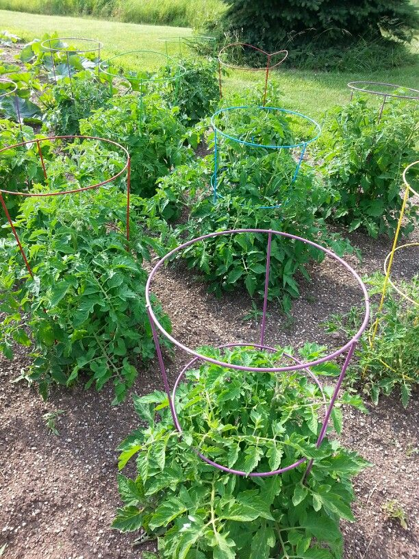 Use colorful tomato cages from Menards to create a tidy and pretty ...