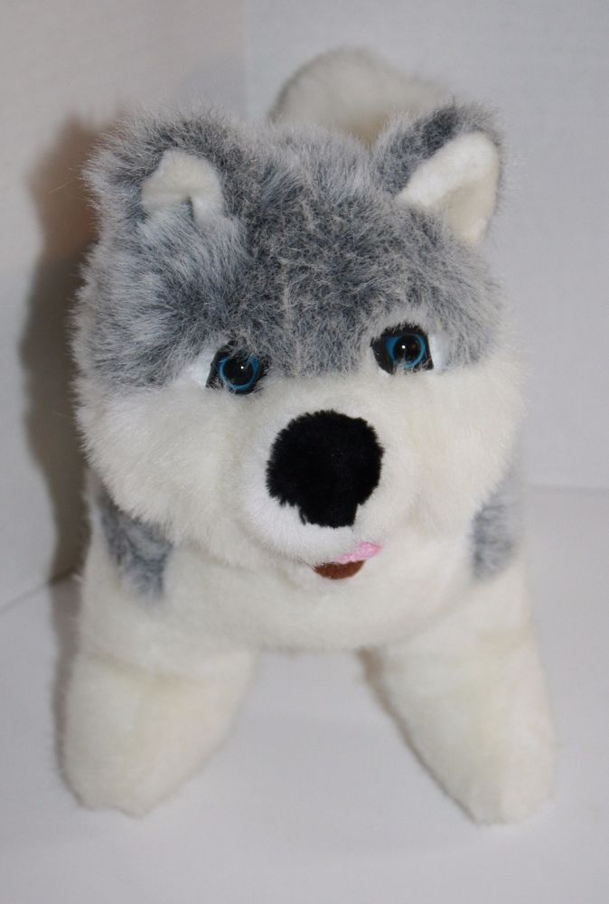 Arctic Circle Siberian Husky Dog Alaska With Pretty Blue Eyes Soft