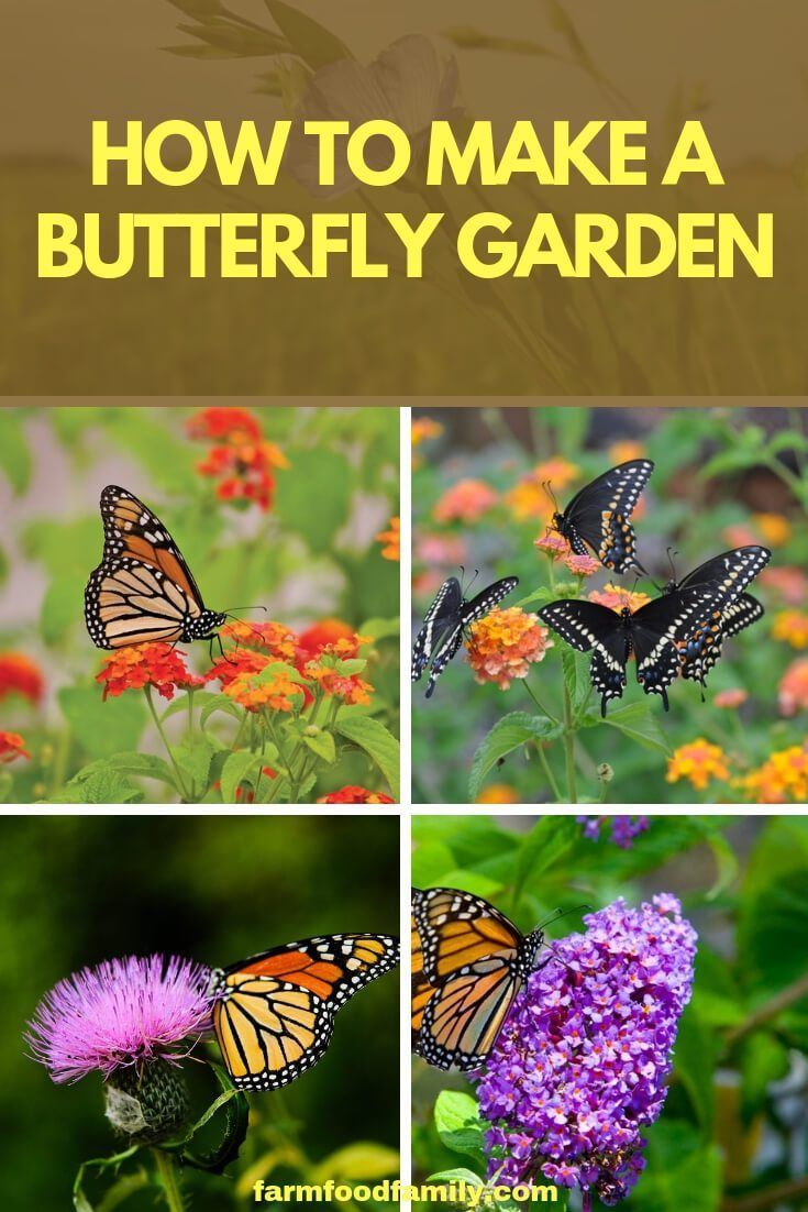 A Butterfly Garden That Is Created In A Sunny Area With A Reliable Source Of Water And Ample Butterfly Garden Plants Butterfly Garden Design Butterfly Garden