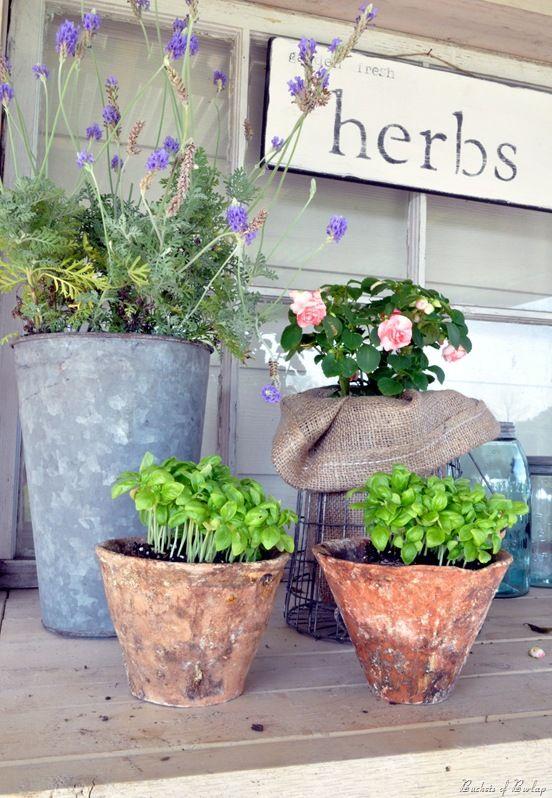 pingl par dani le sur en cuisine les herbes aromatiques pinterest herbe herbes. Black Bedroom Furniture Sets. Home Design Ideas