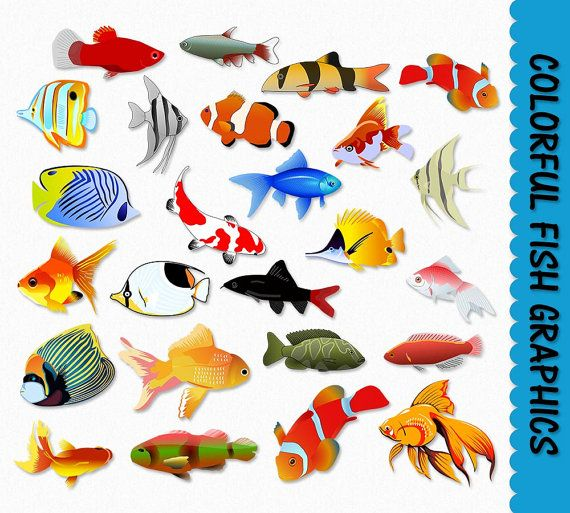 Art Collectibles Clip Art Commercial Use Instant Download Koi Fish Clipart Golden Yellow Orange