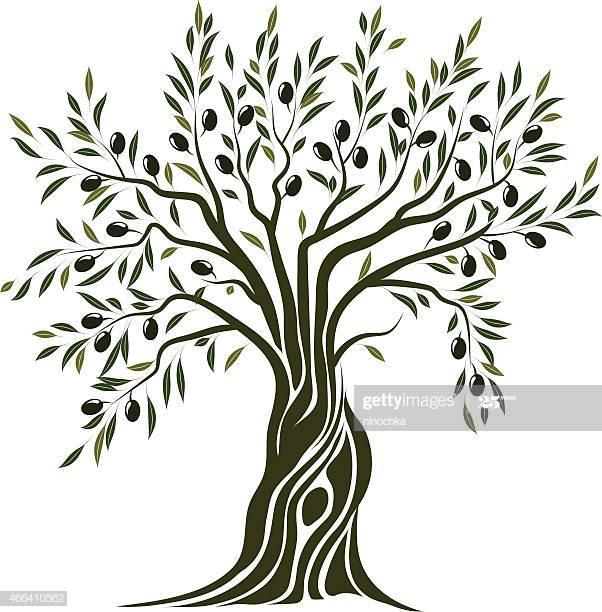 Olive Tree Google Search Olive Tree Painting Tree Illustration Tree Artwork
