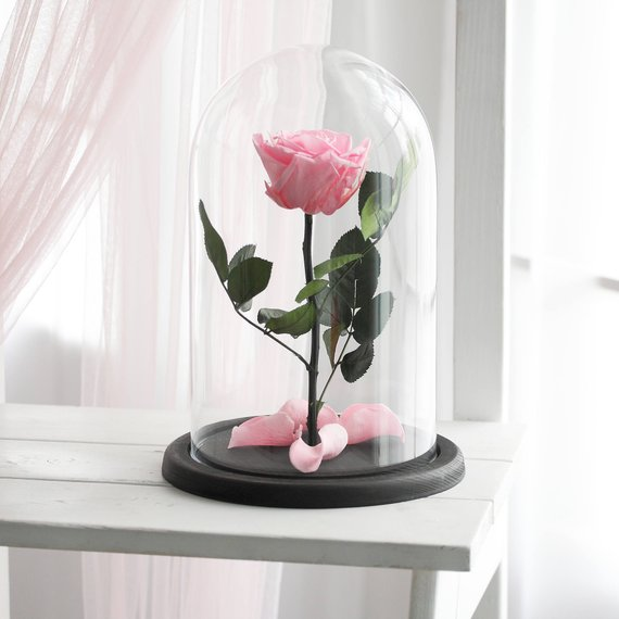 Beauty And The Beast Rose Large Forever Rose Forever Pink Rose