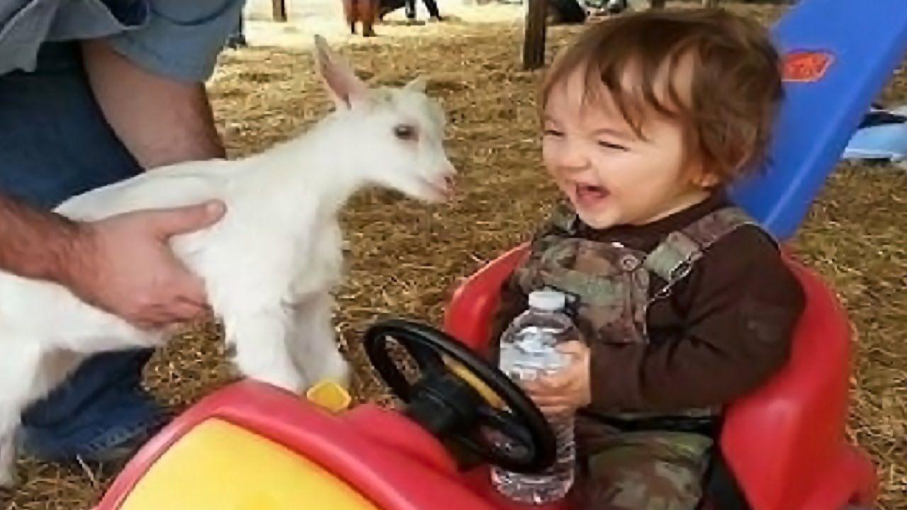 أطرف الأطفال يجتمعون الحيوانات لطيف فيديو مضحك وغير ناجحة Funny Gif Animals Funny
