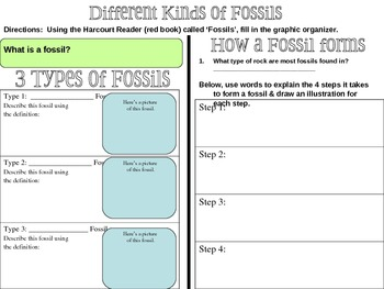 Fossils Graphic Organizer | Graphic organizers, Fossils and Students