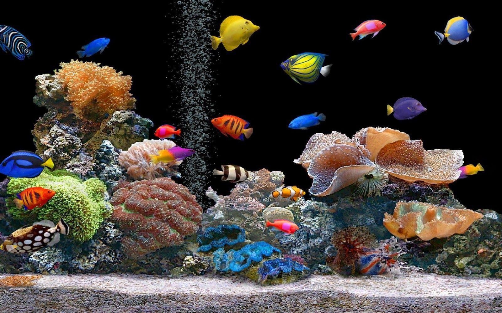 Hd Live Hd Wallpaper For Desktop 3d Fish Wallpaper Aquarium Live Wallpaper Saltwater Fish Tanks