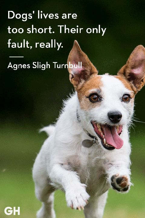 Pin On Dog Quotes Sayings