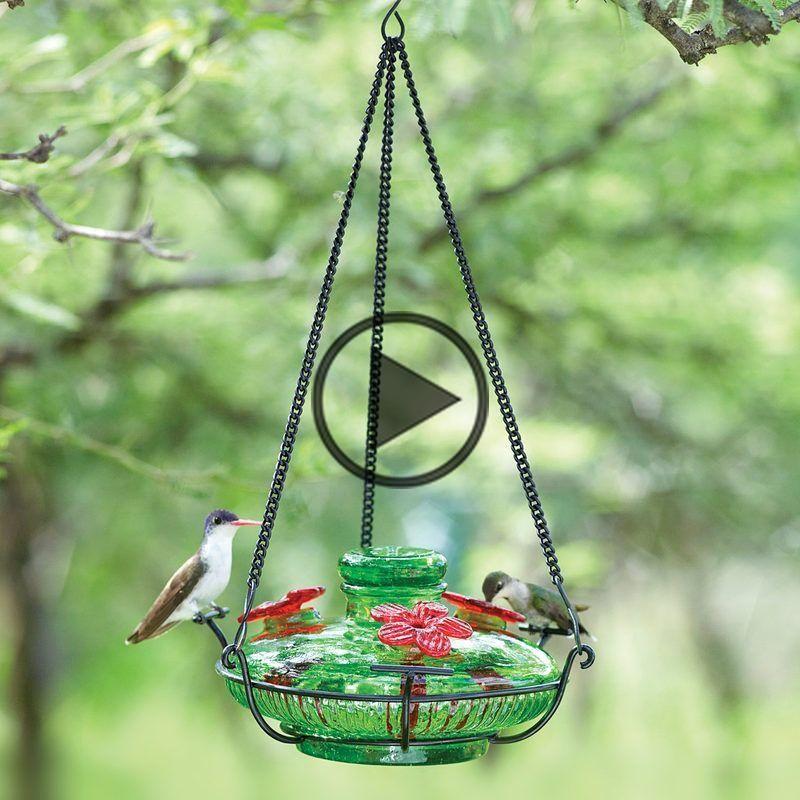 Bloom Perch Hummingbird Feeder Yard Envy in 2020