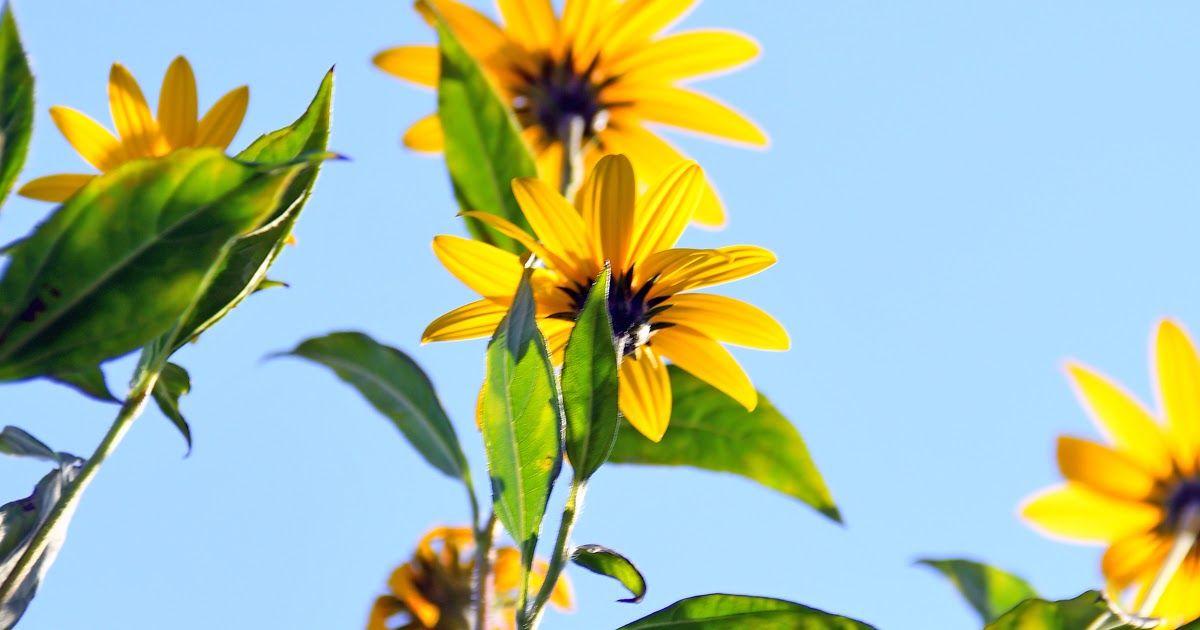 Pin On Gambar Bunga