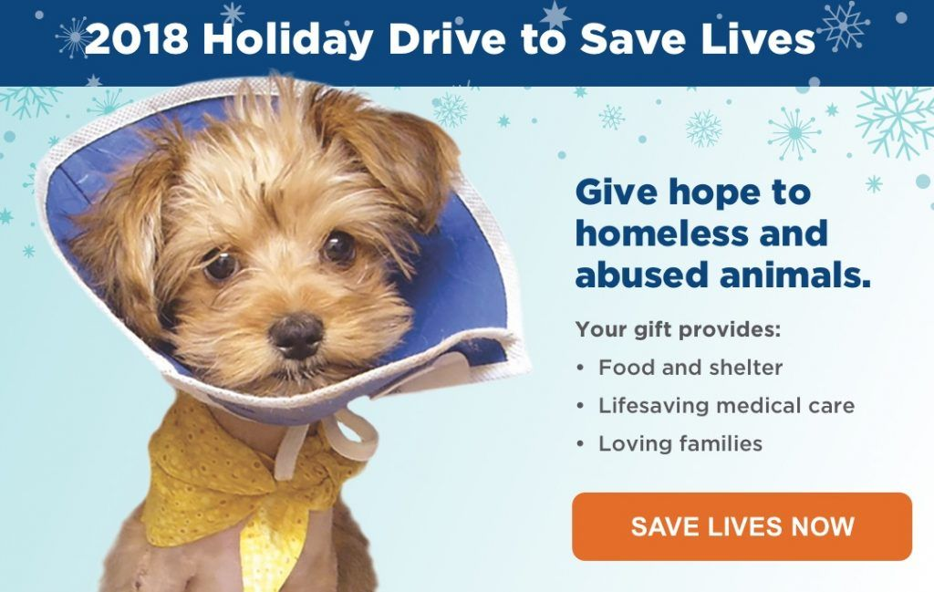 San Diego Humane Society Inspire Compassion Humane Society