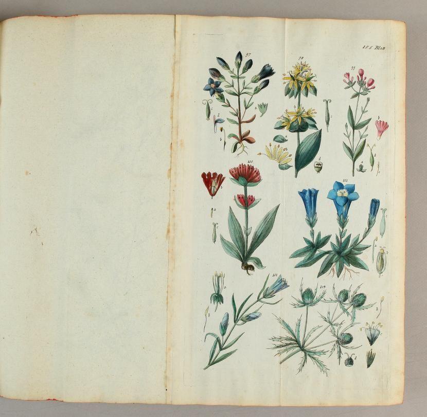 Handbuch der pharmaceutischen Botanik. : Mit il... | Natural History ...