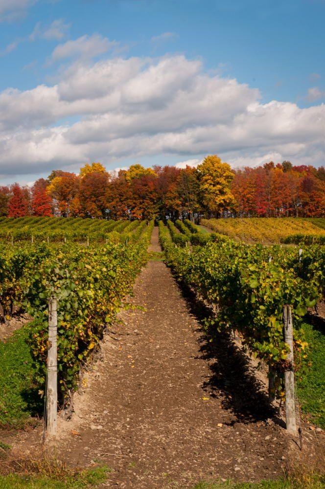 Glenora Vineyards, NY by Varuka Blue on 500px | Seneca Lake | Winery | Vineyards