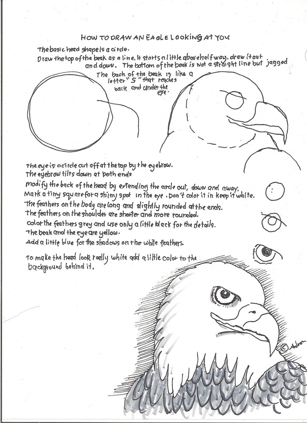 How To Draw An Eagle Face Lesson And Worksheet