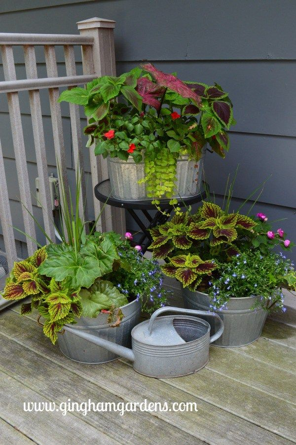 Flower Gardens - Late Spring Blooms #shadecontainergardenideas