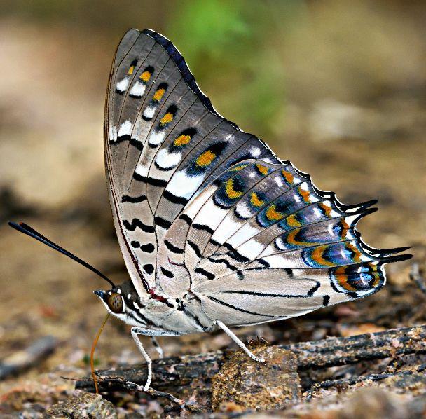 Pin Von Gabi Epple Auf Schmetterlinge Und Motten Unterwasser
