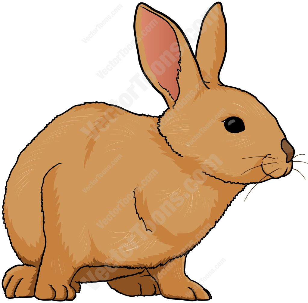 Brown Rabbit Facing Left
