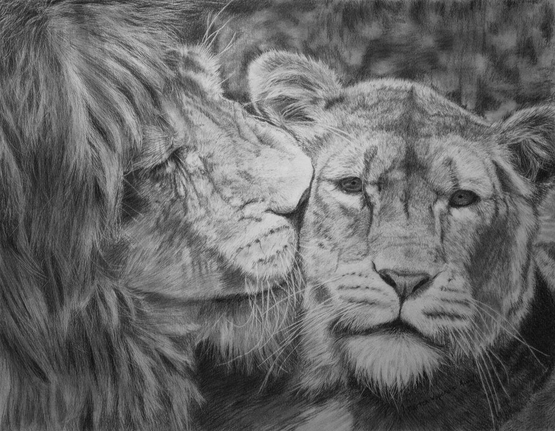 Лев и львица рисунки таких